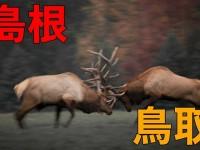 島根VS鳥取 永遠のライバル対決の行方